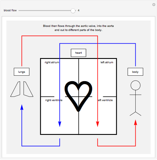 Path of Blood Flow in Circulatory System - Wolfram ...